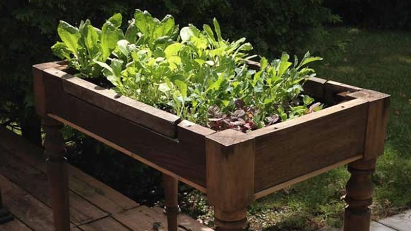 table salade potager diy