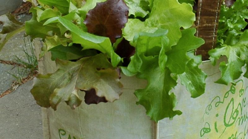 salade sac diy