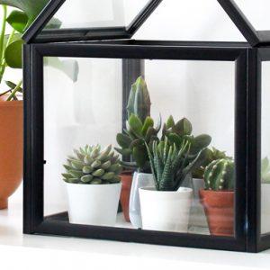 terrarium cadre diy