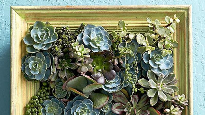 cadre vegetal diy