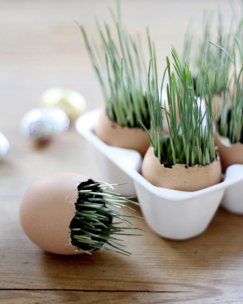 plant oeuf diy