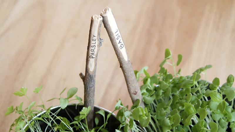 marqueur plante diy baton