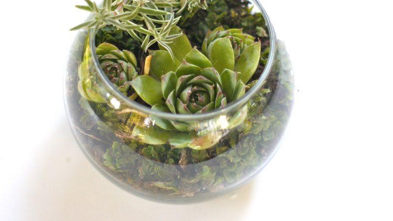terrarium boule verre aquarium diy
