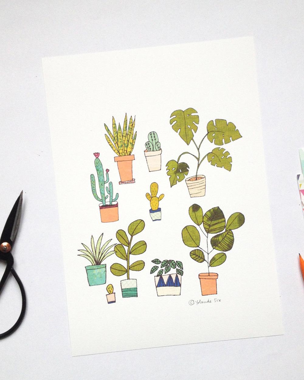 illustration végétale plantes grasses