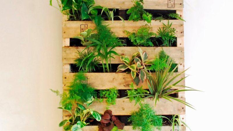 Un jardin vertical diy avec une palette shake my blog for Plantaciones verticales