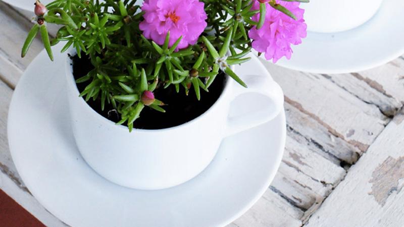 tasse pot fleur diy