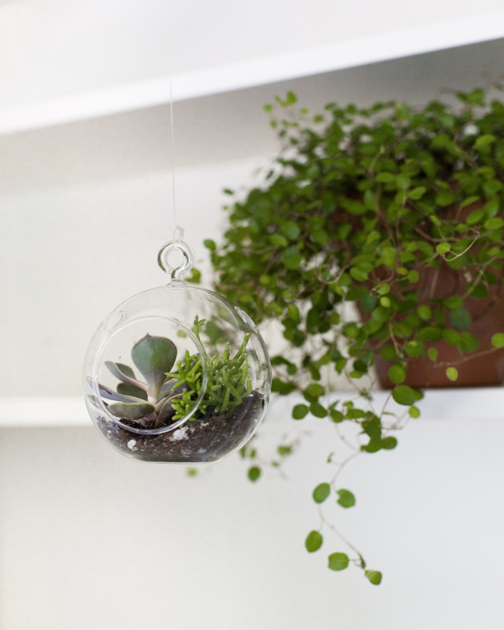 un terrarium suspendu diy avec des boules en verre shake. Black Bedroom Furniture Sets. Home Design Ideas