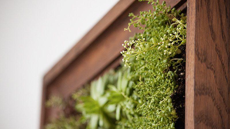 jardin vertical plateau diy