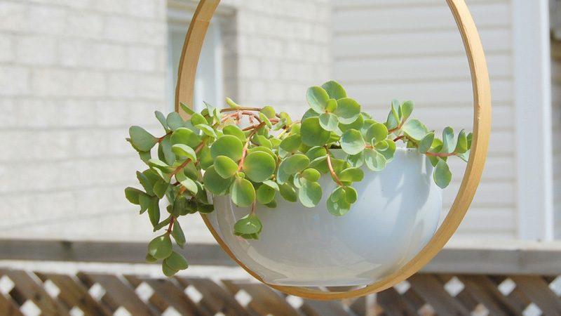 plante suspendue diy cercle à broder