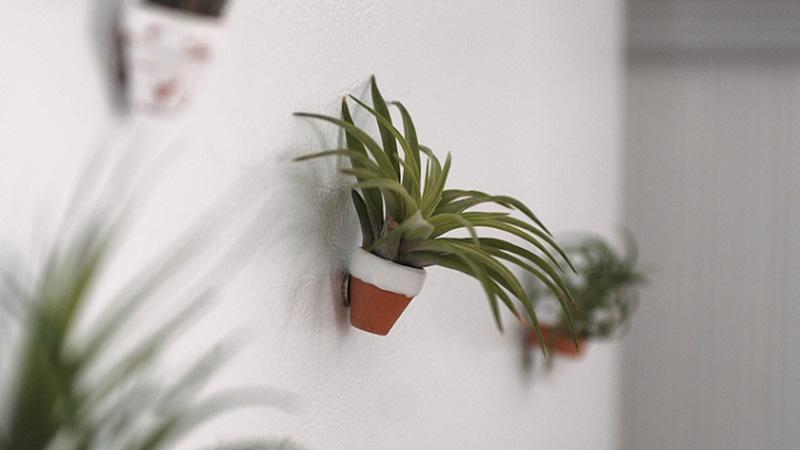 plante aimant diy