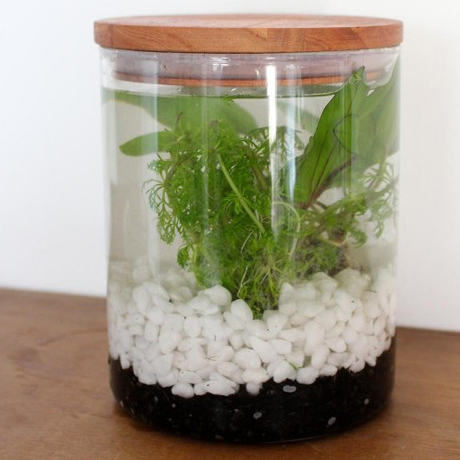terrarium bocal diy aquatique