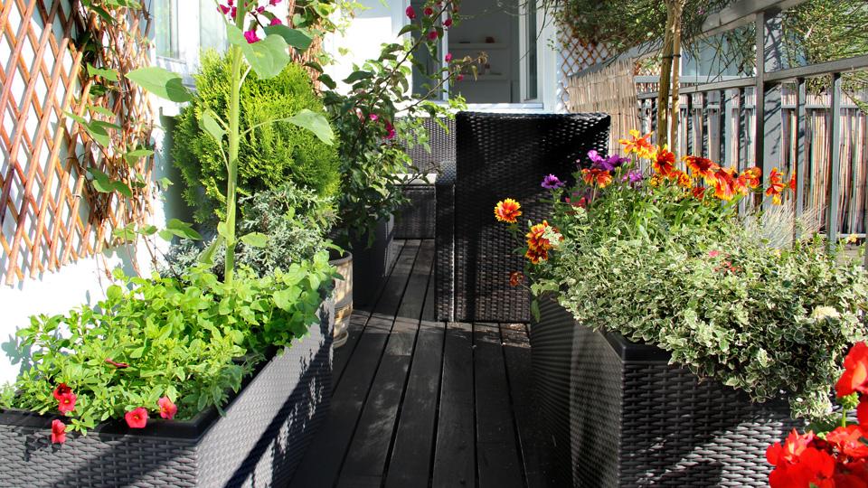 jardin express