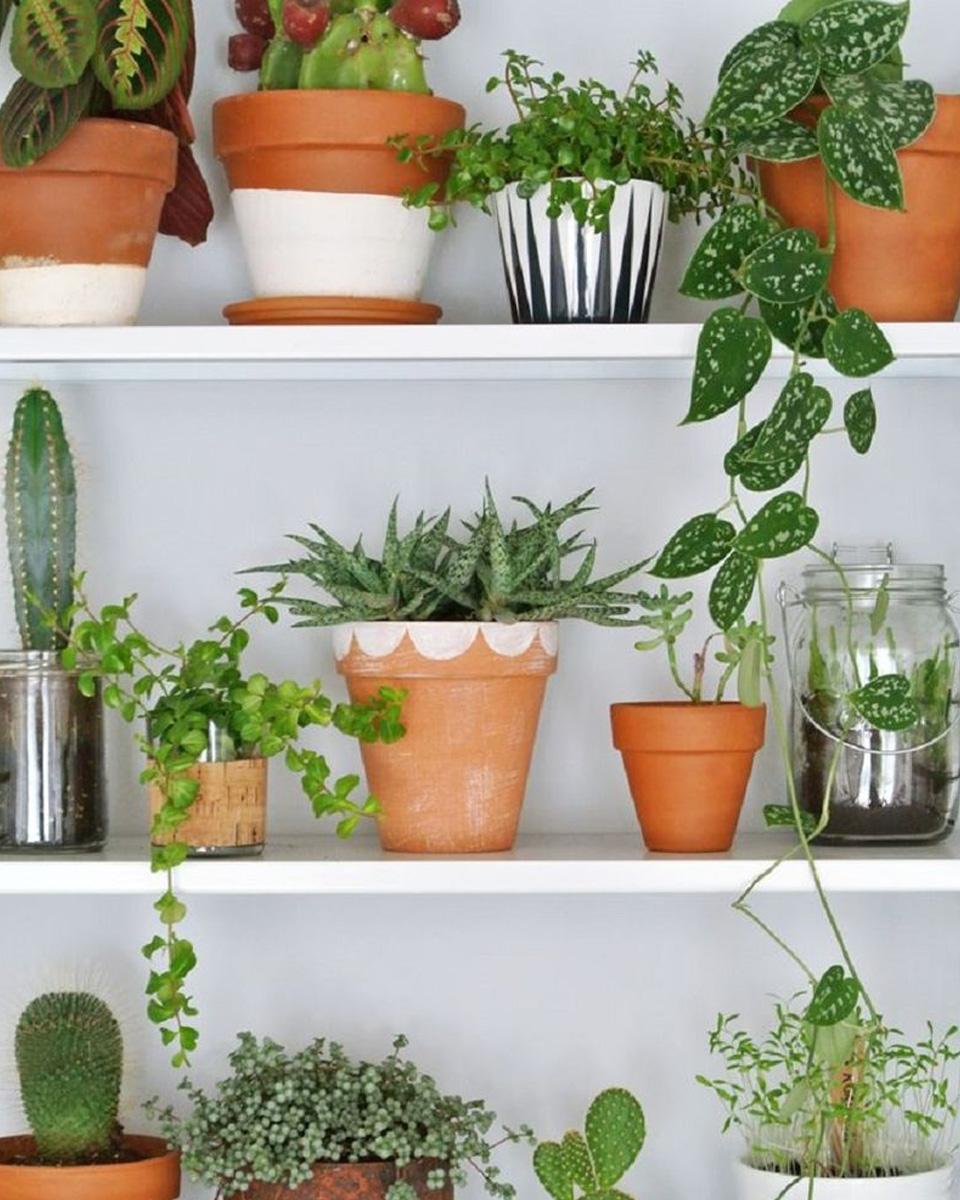 accumulation plantes