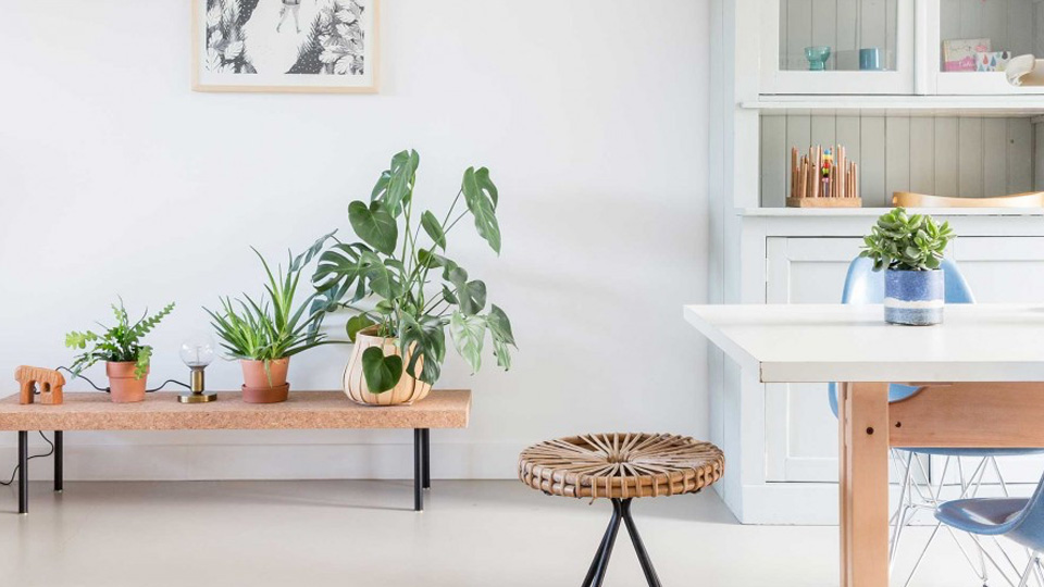 deco tropicale feuille monstera