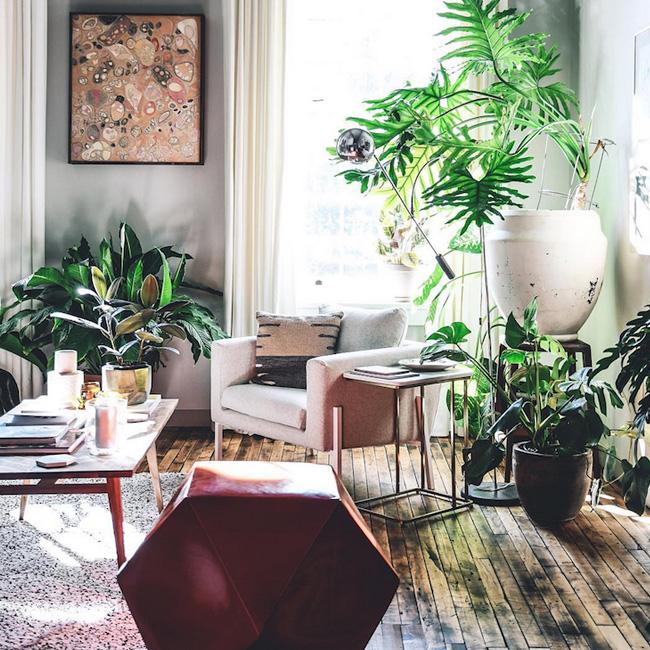 deco salon jungle urbaine