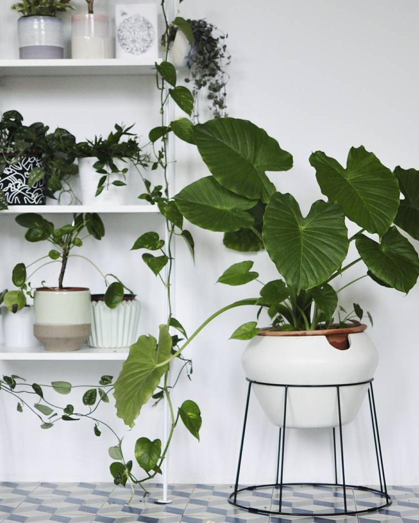 compte instagram plantes
