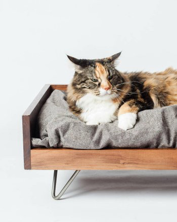 lit chat bois sur pieds