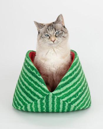 lit chat pastèque
