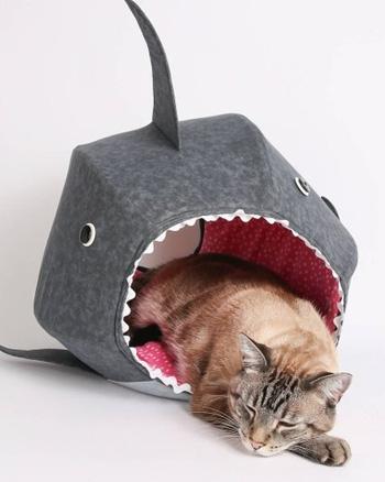 lit chat requin
