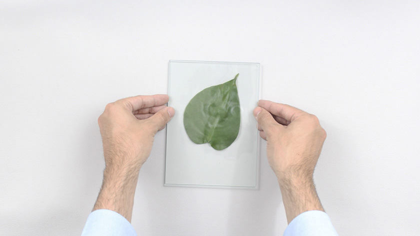 cadre vegetal diy étape 8