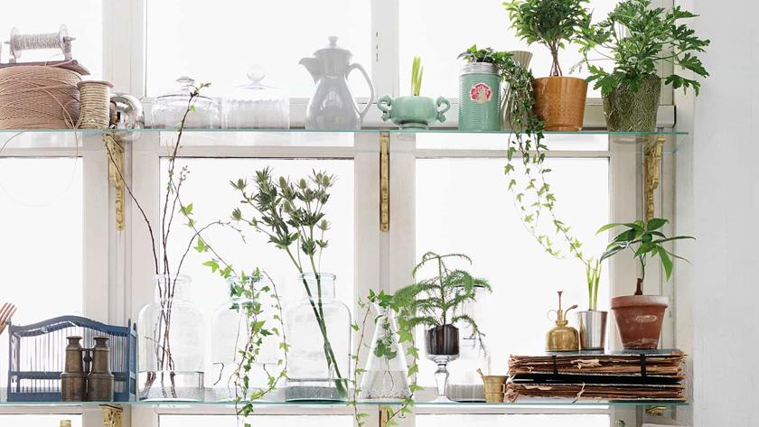 deco fenetre plante étagère