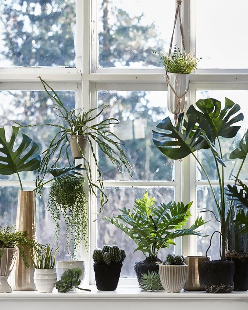 deco fenetre plante suspendue