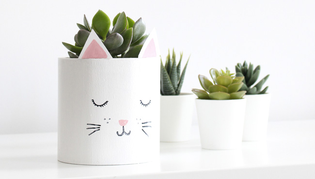 diy pot chat plante