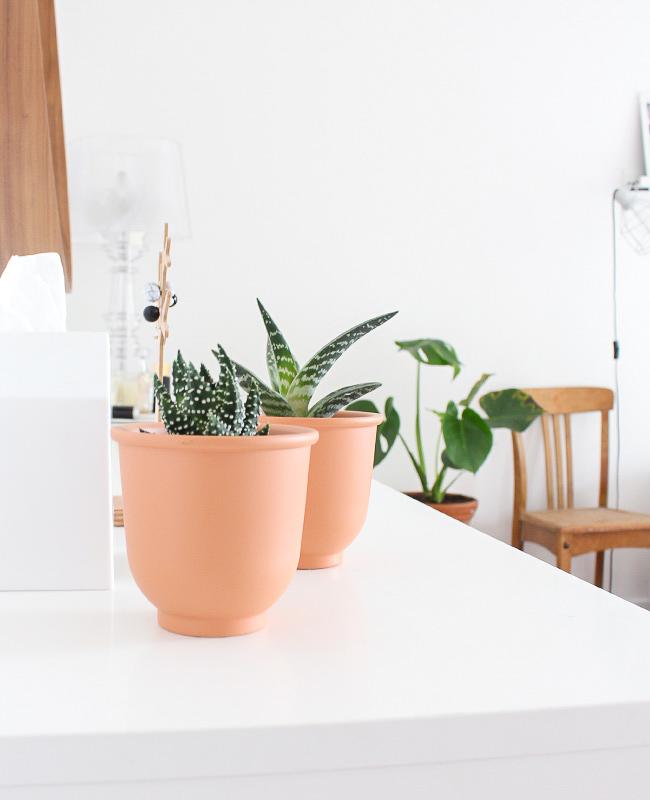 visite deco ysabelle plantes