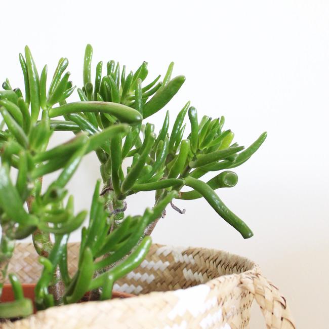 visite deco ysabelle plante