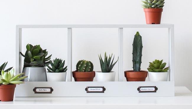 étagère casier plante diy