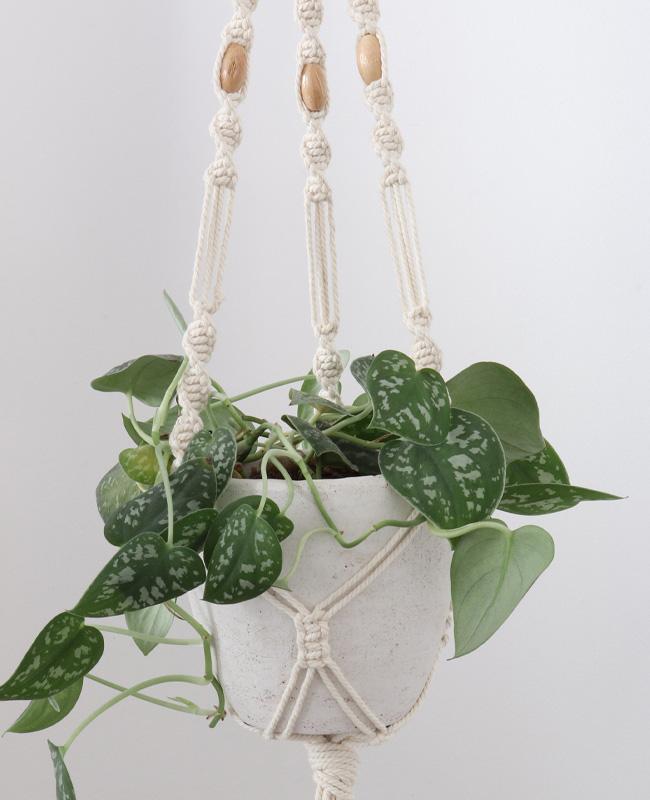 etsy the wild world kit diy macramé plante