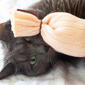 jouet chat diy