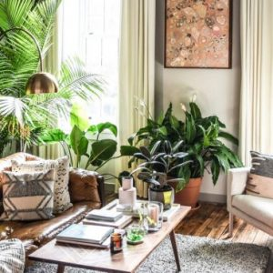 deco appartement urban jungle