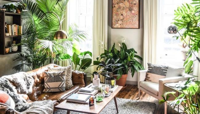 deco appartement urban jungle
