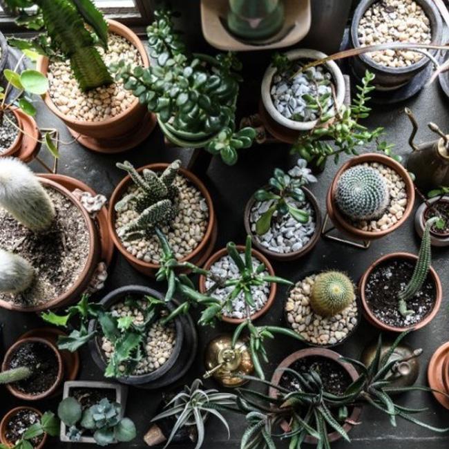 deco appartement urban jungle cactus