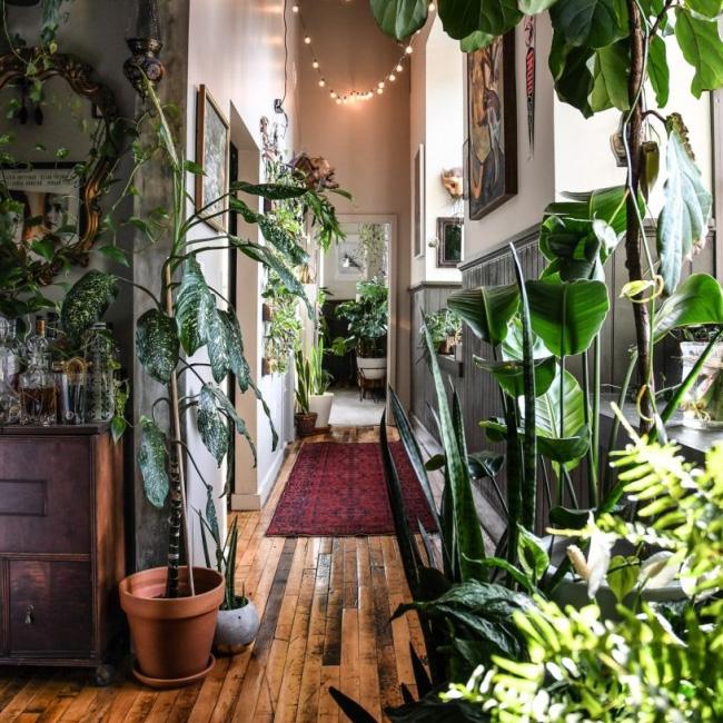 deco appartement urban jungle entrée