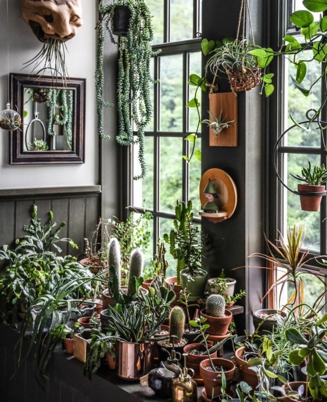 deco appartement urban jungle plantes