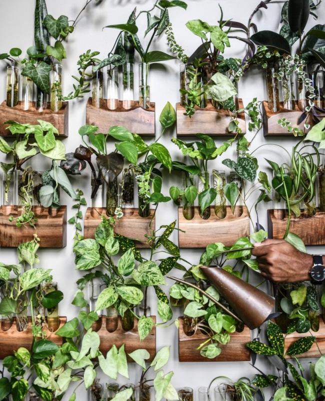 deco appartement urban jungle mur végétal