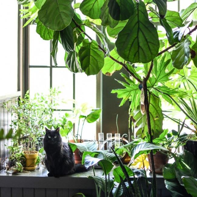 deco appartement urban jungle cuisine