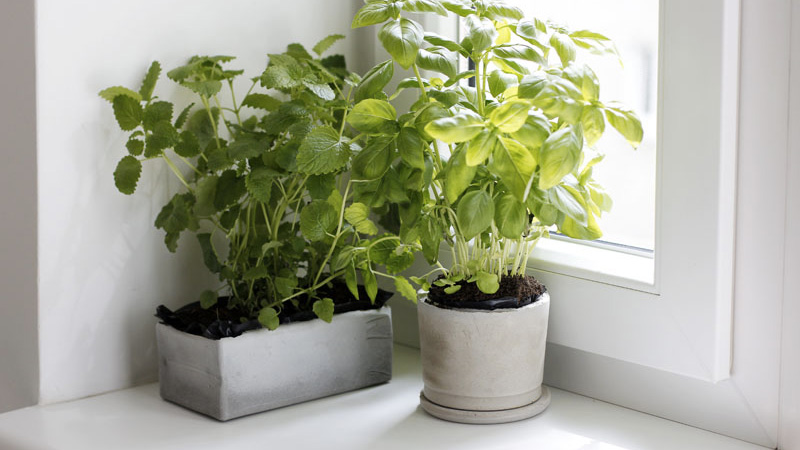 pot beton diy plante