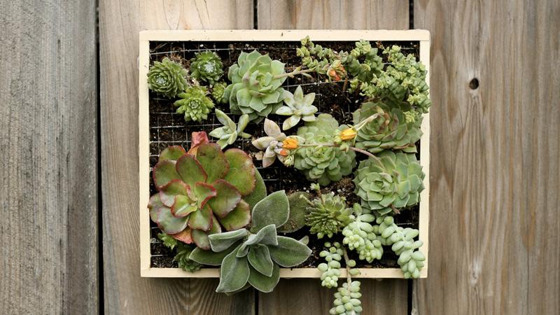cadre végétal diy boite