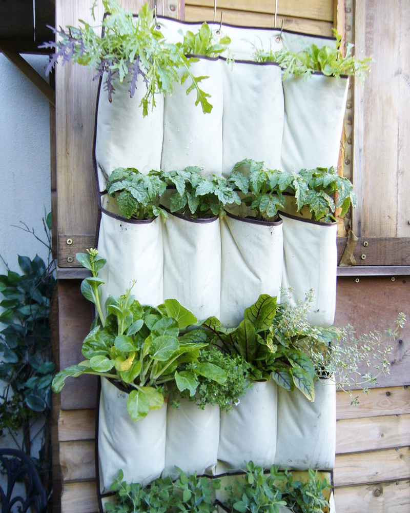 jardin vertical diy sac chaussure