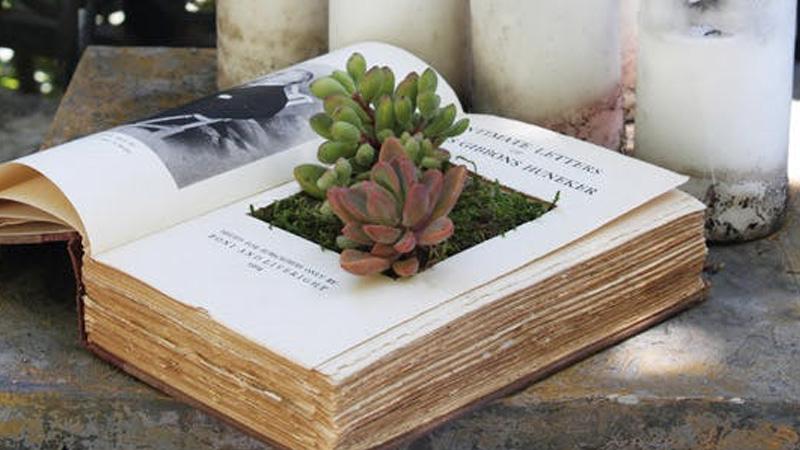 plante livre diy