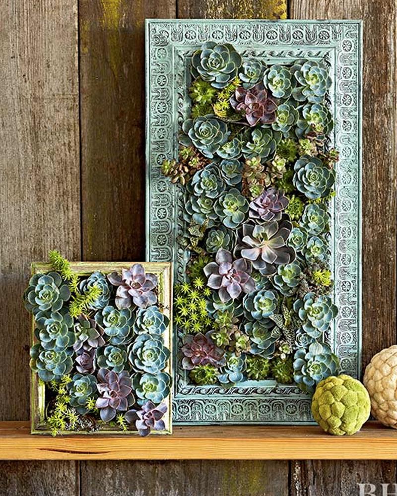 Mur Vegetal Plante Grasse un cadre végétal diy | shake my blog
