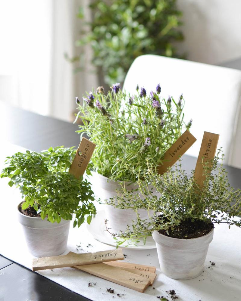 marqueur plante diy bois