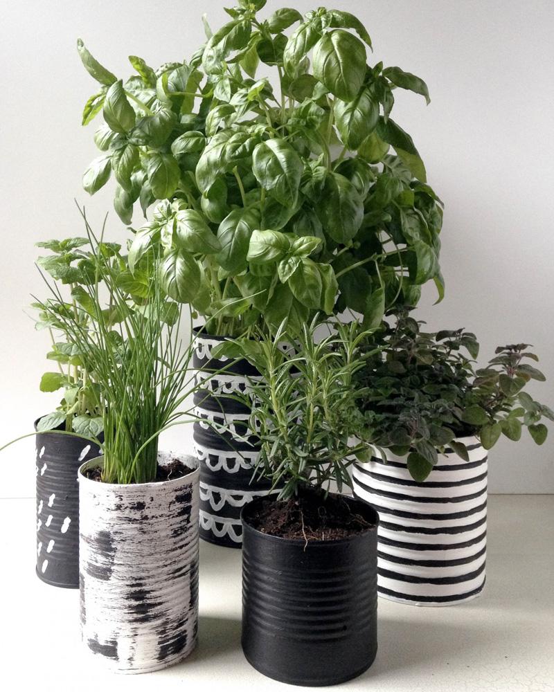 pot diy plante aromatique