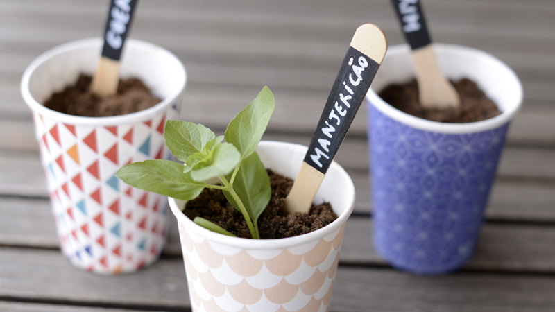 plante aromatique gobelet diy