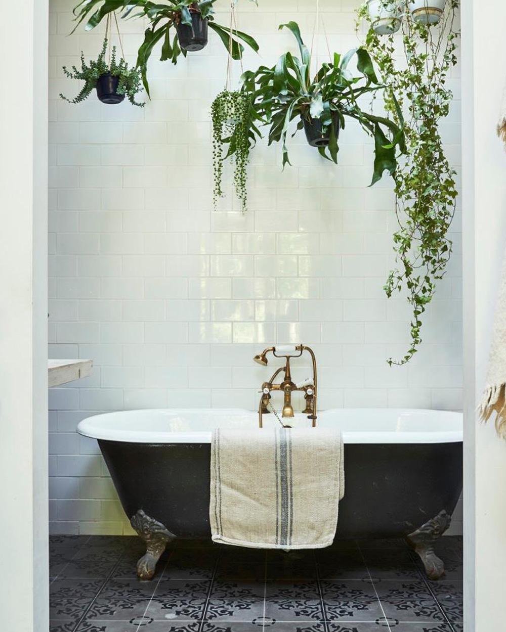 salle de bain vintage plantes