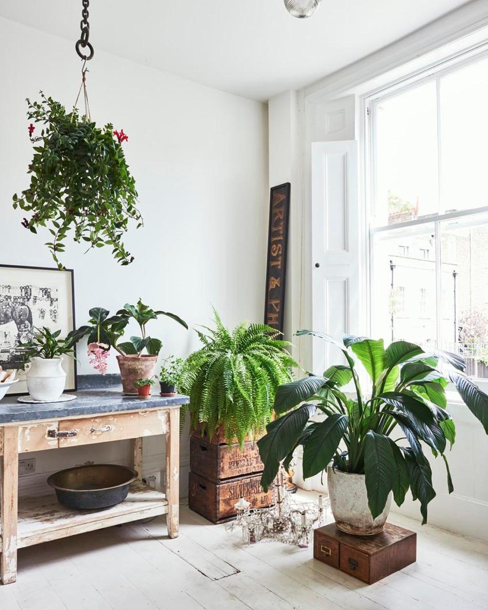salon plantes esprit vintage