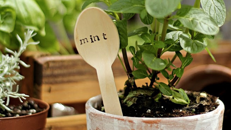marque plante diy cuillère